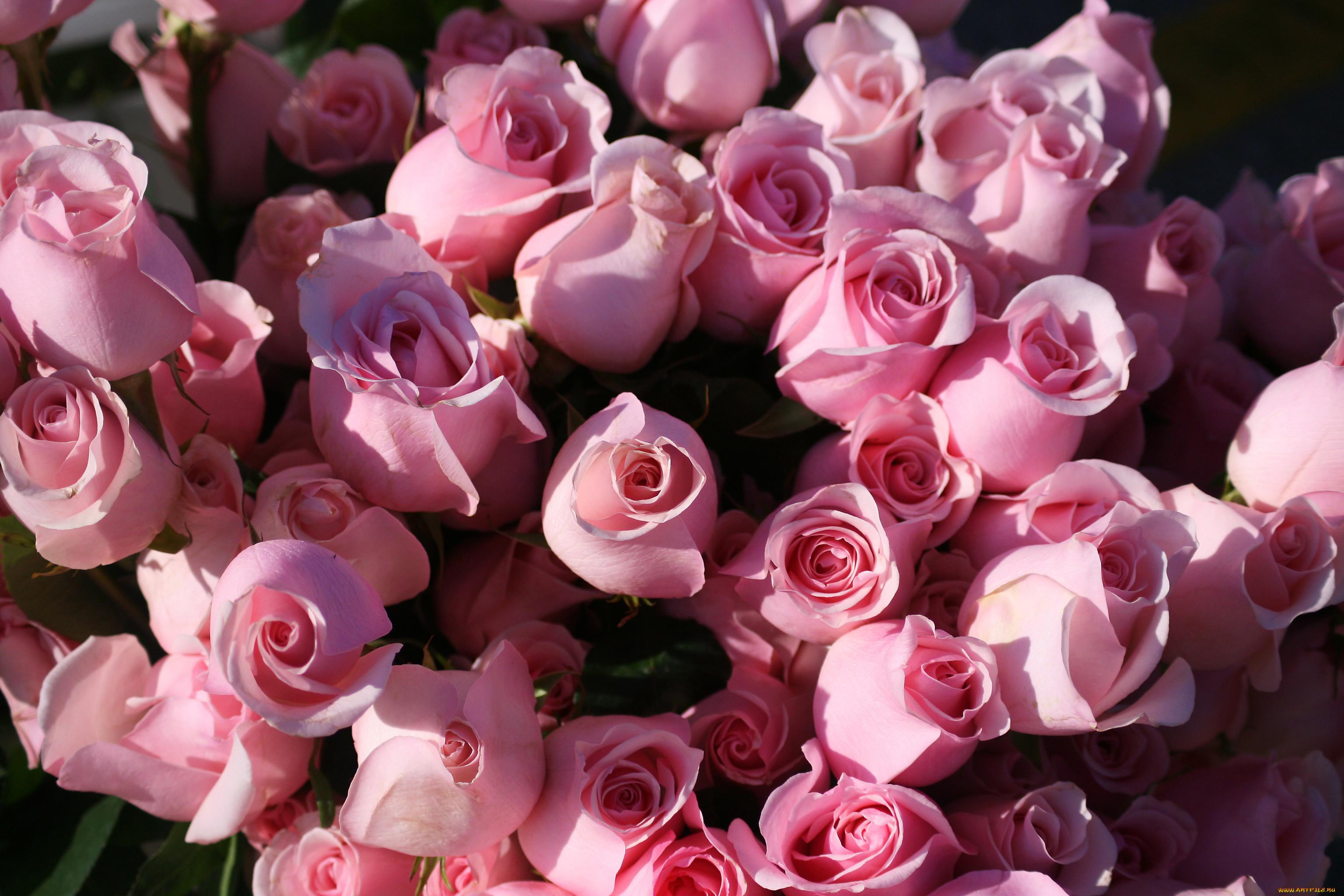 новые картинки букетов роз на телефон уже
